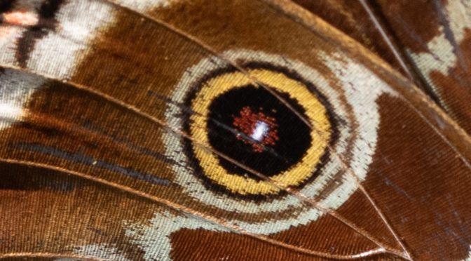 MoS Butterflies
