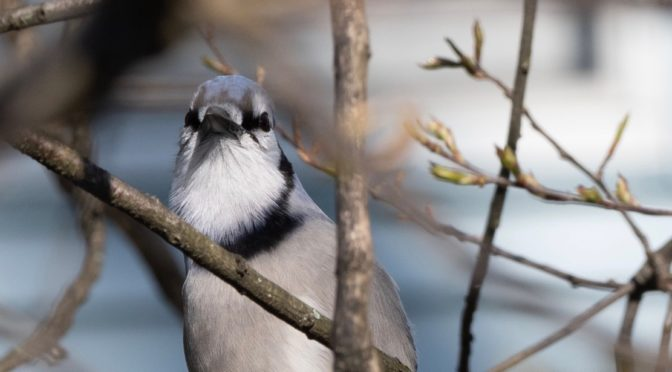 Blue Jays and Squirrels oh my!
